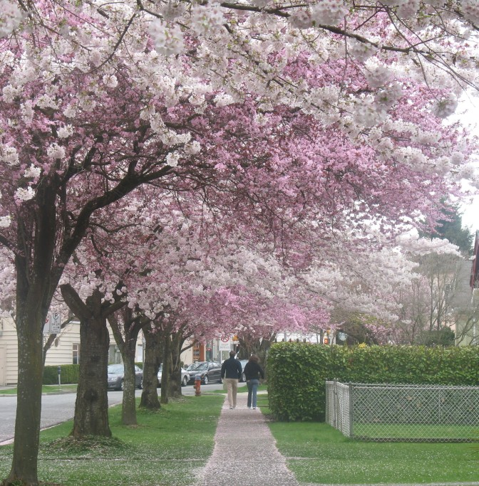 "The bloom is off the cherry trees.  <a href=""https://www.vancouverisawesome.com/2018/08/01/vancouver-best-canadian-cities-to-live-rankings/"">https://www.vancouverisawesome.com/2018/08/01/vancouver-best-canadian-cities-to-live-rankings/</a>"
